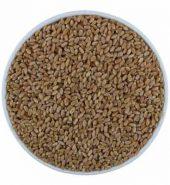 Samurnabazaar Premium Sihore Wheat Loose 1 Kg